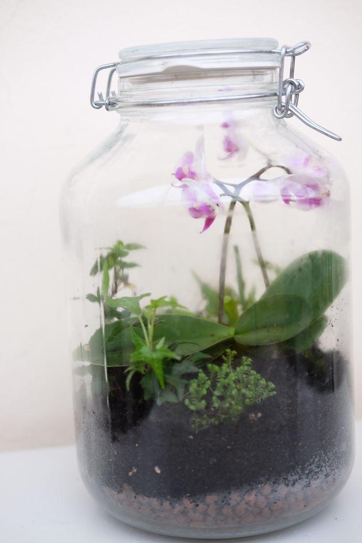 flaschengarten mit orchideen venusfliegenfalle farnen moosen und efeu planzen botanik. Black Bedroom Furniture Sets. Home Design Ideas