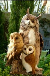 #owls ~ETS