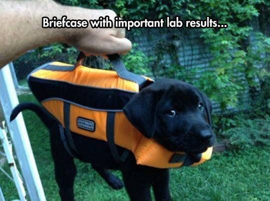 critically important lab results