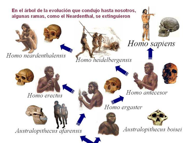 ... Teorías evolutivas 1.- Lamarckismo Lamarck (1744 – 1829) Jean Baptiste de Monet, caballero de Lamarck, naturalista francés. En 1809 publicó Philosophie. http://slideplayer.es/slide/3961475/    http://slideplayer.es/slide/3123109/ http://slideplayer.es/slide/1088501/ http://es.slideshare.net/tango67/evolucion-3377786 http://www.chismesmundo.com/la-evolucion-del-hombre/