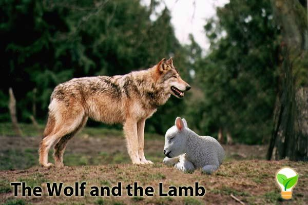 The Wolves And The Lamb Part 12