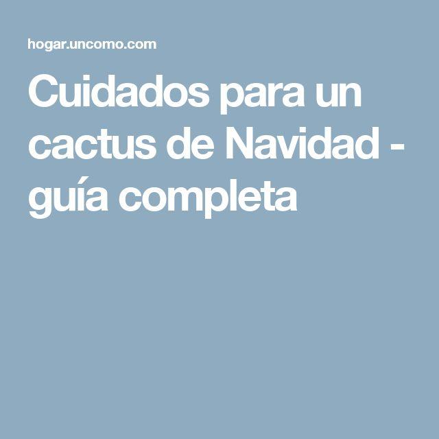 Cuidados para un cactus de Navidad - guía completa