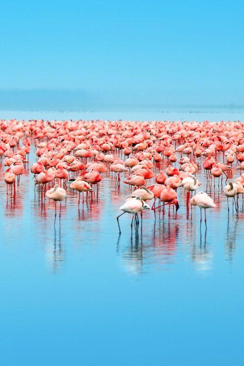 Lake Nakuru National Park - Kenya