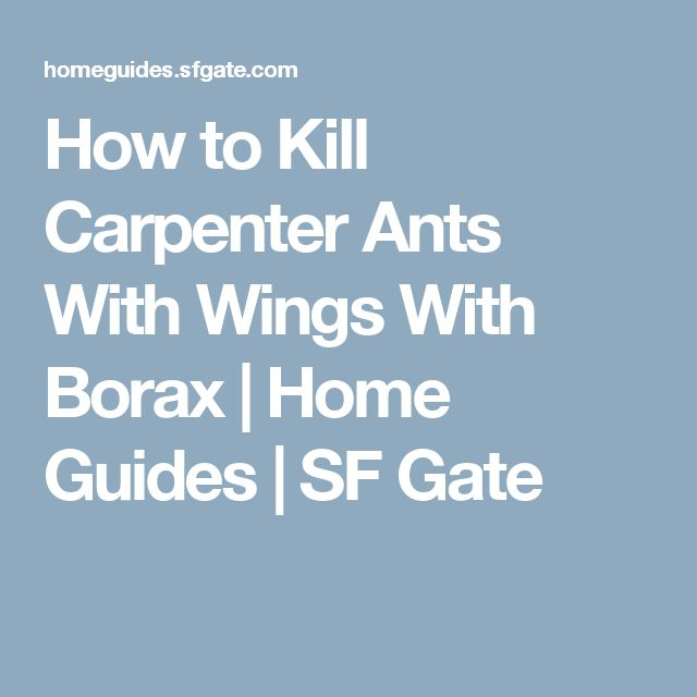 How to Kill Carpenter Ants With Wings With Borax | Home Guides | SF Gate