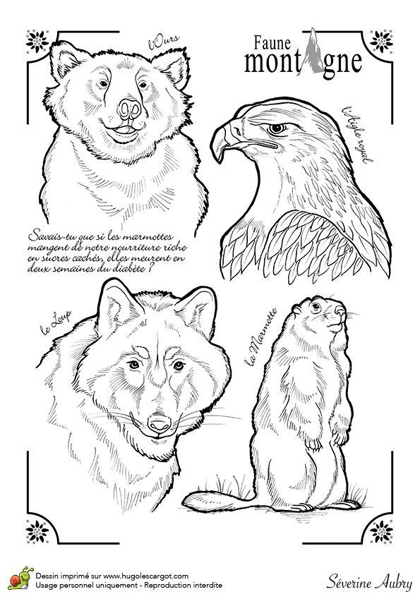 Illustration à colorier des animaux de montagne comme le loup, l'aigle royal, l'ours et la marmotte