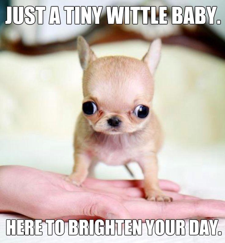 The cutiest!