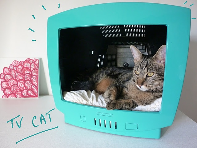 Très amusant ! TV Cat pour les chats :)