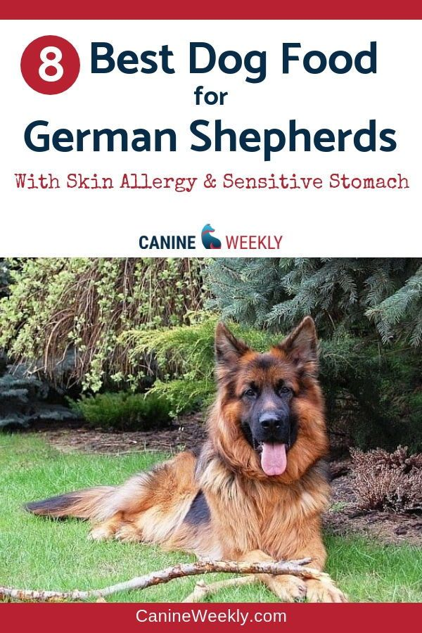8 Best Dog Food For German Shepherds 2020 Reviews Best Dog