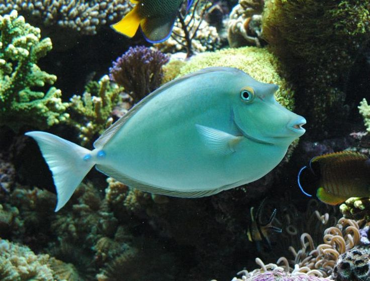 17 best ideas about salt water fish on pinterest for How to saltwater fish