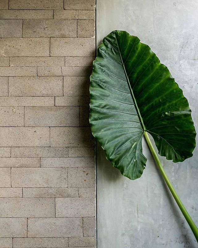 Favourite leaf at favourite boutique hotel at my favourite area of my favourite island. THE SLOW SUITES. EAT & DRINK. CANGGU. BALI, shot by Bali Interiors. #bali #baliinteriors #interiordesign #homedecor