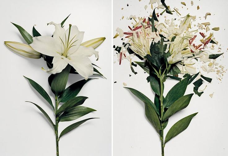 Flores embebido em nitrogênio líquido quebrado em pedaços by John Shireman