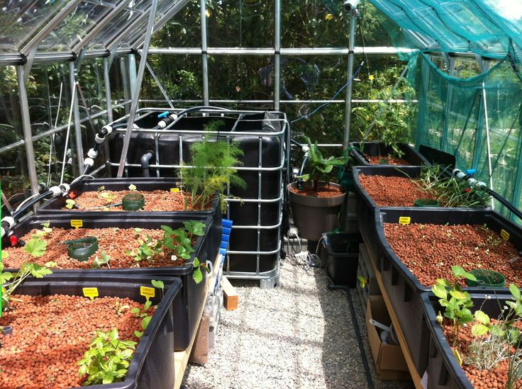 My own aquaponics system aquaponics pinterest for Garden pool aquaponics