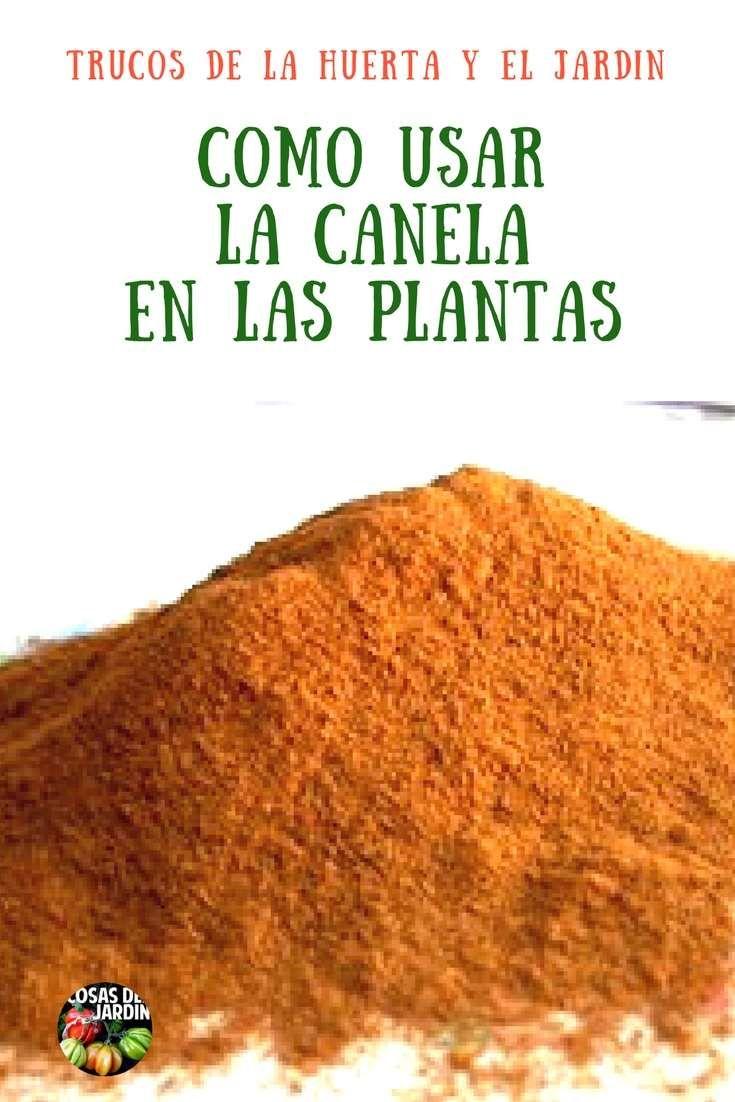 Usos de la Canela en las Plantas – Fungicida, Enraizante y Repelente de Hormigas
