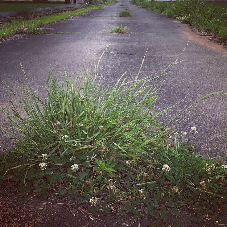 plants  photoart  visualart  nature  green  フォトアート  視覚芸術  …