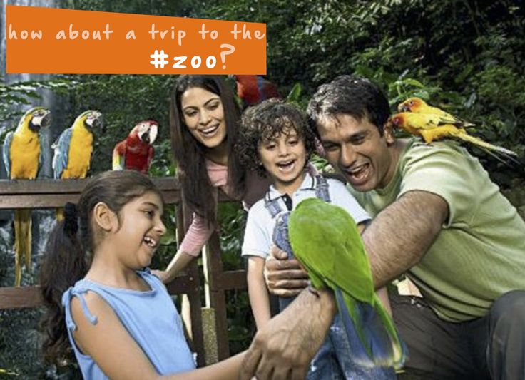 How about taking a family trip to your local #zoo? #familyfun #kidsactivities #thingstodo