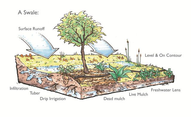 How a Swale Works - Click Image to Visit the Water Conservation Open Source Hub with Videos