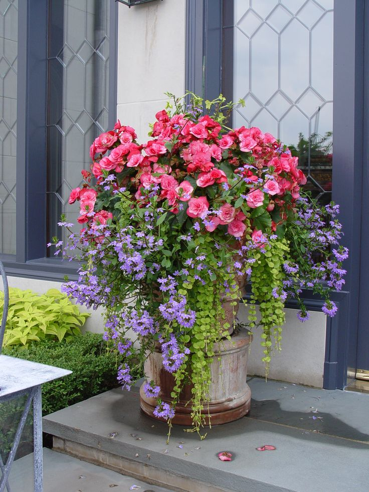 Best 25 Container flowers ideas on Pinterest Container plants