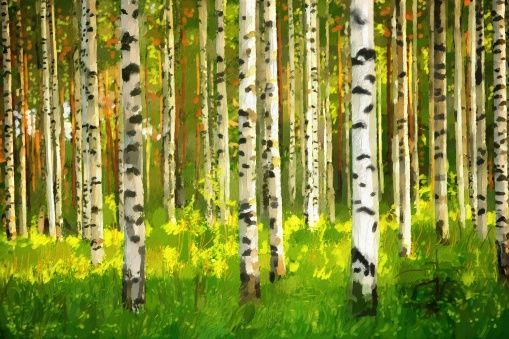 Birch Forest - Oil Painting - photo-wallpaper