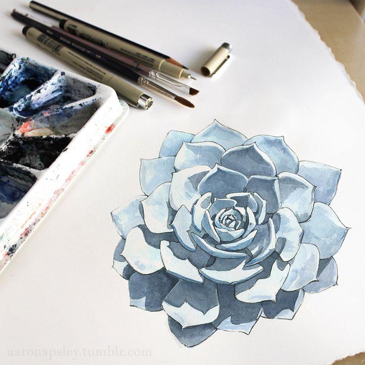 Echeveria lilacina - watercolor and ink illustration. www.aaronapsley.com