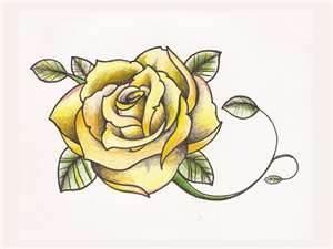Yellow rose kimi