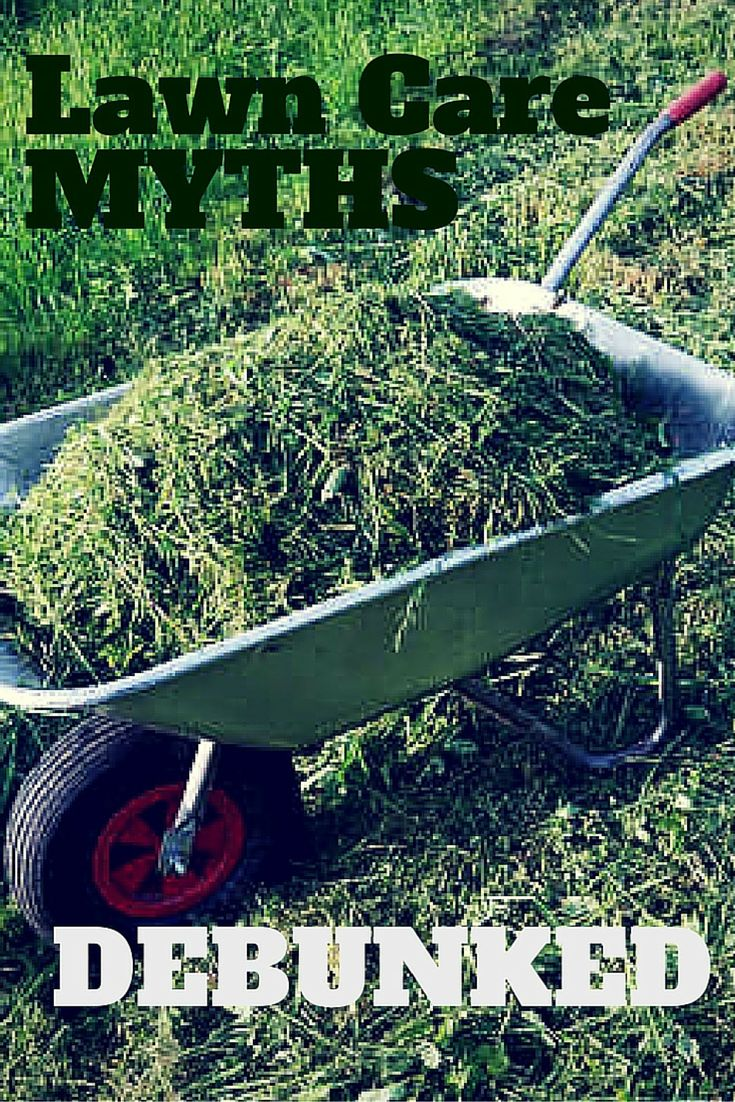 Stop wasting time on these lawn care myths. Yard and lawn care doesn't have to be that hard.