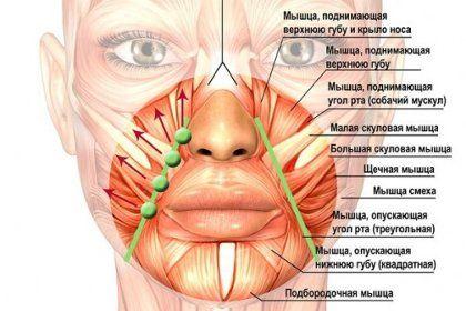 Как избавиться от носогубных складок: этапы восстановления лица