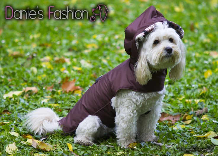 Dog winter coat http://daniesfashion.com/