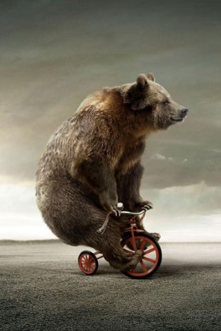 Circus Bear On Tricycle