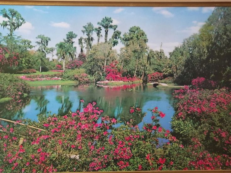 HELMSCENE Lighted Wall Picture of Cypress Gardens Vintage In Mint Condition WOW