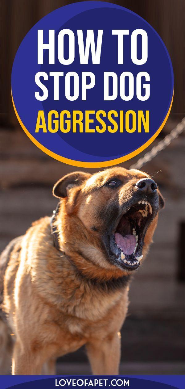 9f639f0975097ffe545ff0e29ffae741 - How To Get A Dog To Stop Aggressive Biting