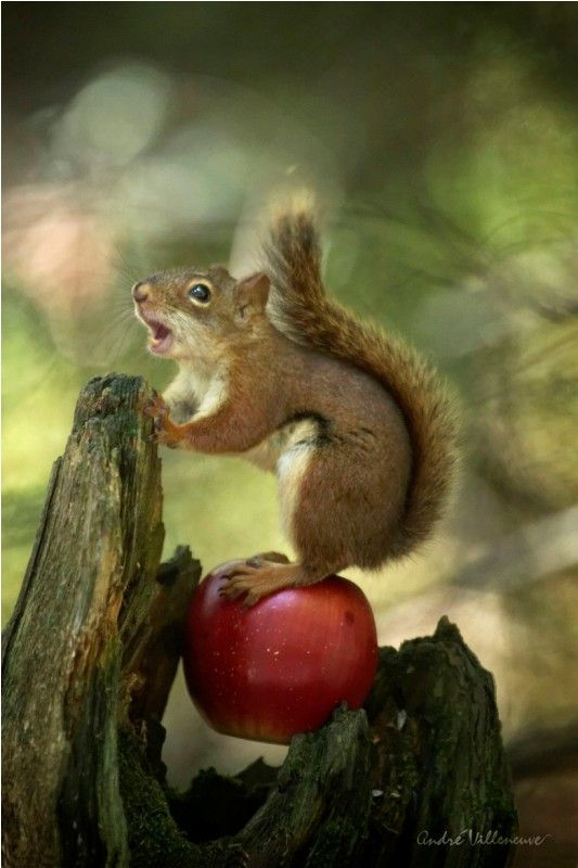 An apple singer