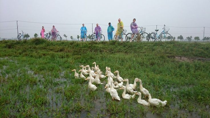 Is that Daffy or Donald? .#VietnamSchoolTours #Cycling #Countryside