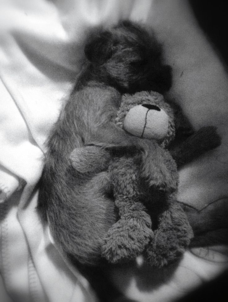 Nothing comes between Frank the Border Terrier and his bear.