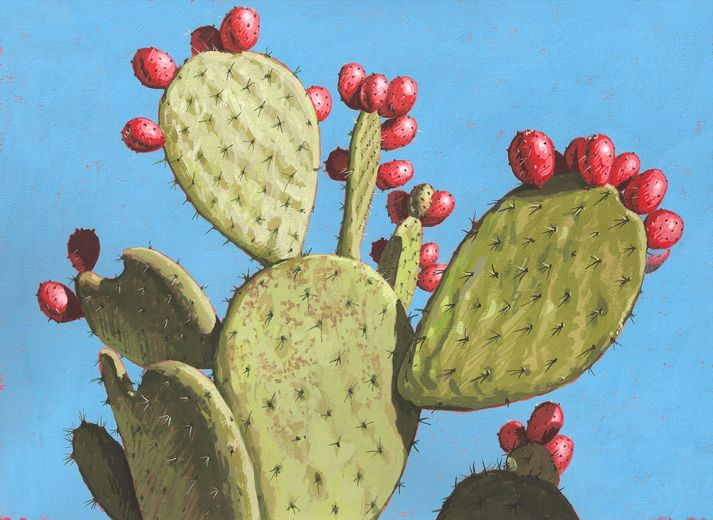 24 best images about prickly pear on pinterest