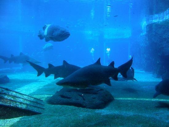 Sea World Aquarium ; Durban ; South Africa