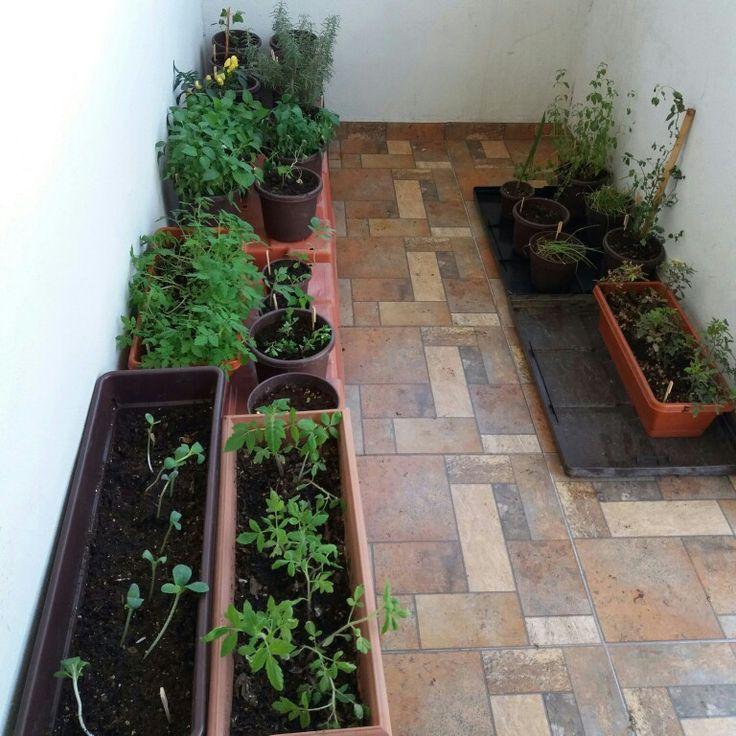 Bonito Domingo! Y asi vamos en mi #HuertoUrbano casi estoy por transplantar: #TomateCereza #ChilePoblano #ChileChilaca #ChileJalapeño y la #Calabaza espagueti va avanzando 🌱👍 cada dia es una alegria! #Composta #Siembra #Recicla #ChefPlantivoro #Vida #JardinDelChef #UrbanGarden #Compost #Recycle #Gardening #ChefGarden #Life