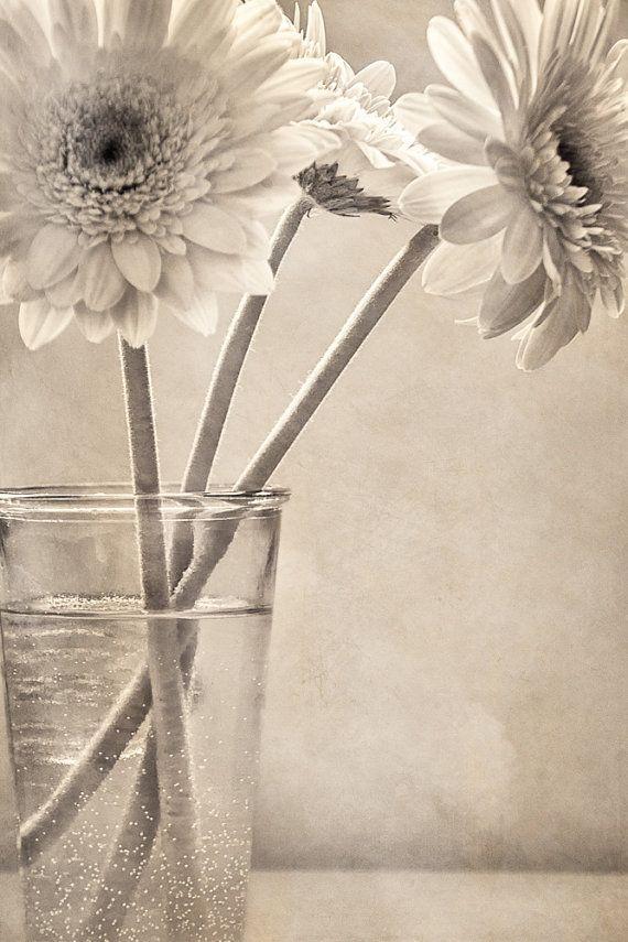 Impresión del arte de Margarita gerbera flores por ChasedByBeauty