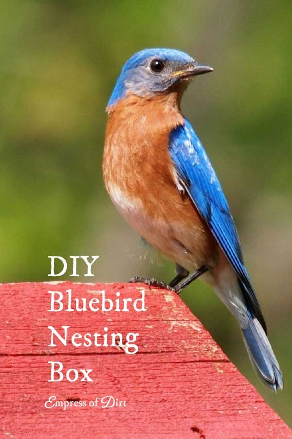 719 best birdhouses bird baths bird feeders images on for Types of birdhouses for birds