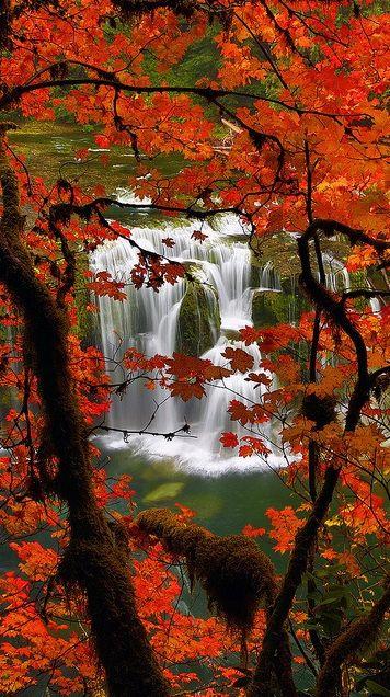 Lower Lewis River Falls 60 mi. east of Woodland, Washington