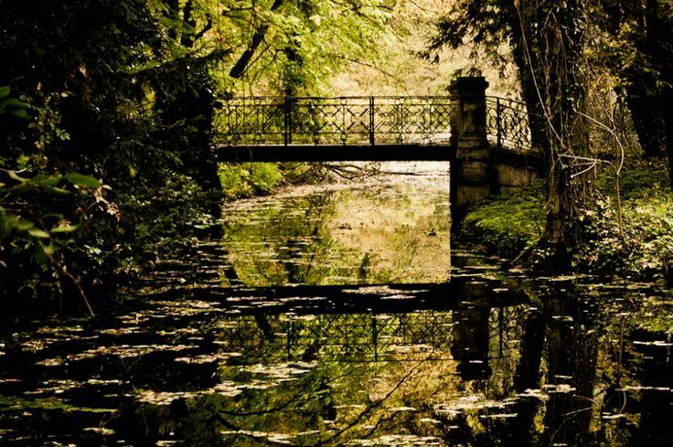 híd az erdőben / bridge in the forest Alcsút, Hungary, 2010