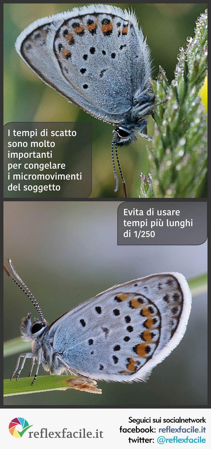 Come evitare il #mosso nelle #foto #macro? #macrofotografia #infographics www.reflexfacile.it/evita-il-mosso-in-macrofotografia/