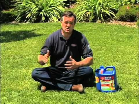 Lawn Care: How To Grow Grass in the Shade | Bayer Advanced