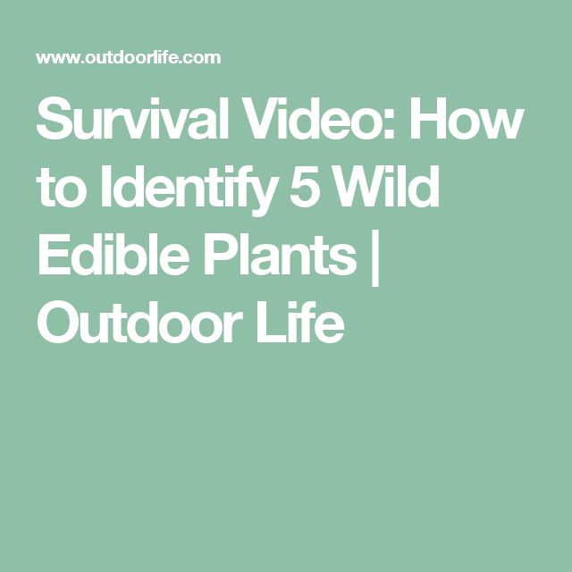 Survival Video: How to Identify 5 Wild Edible Plants   Outdoor Life