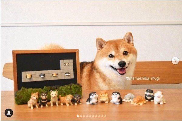 見つけたらガチャしたくなる 話題の 柴犬カプセルトイ 3選 いぬのきもちweb Magazine 柴犬 柴犬 グッズ いぬ