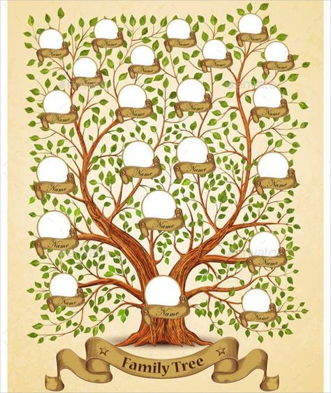 Best 25+ Family Tree Diagram Ideas On Pinterest | Greek Family Tree, Age Of  Mythology And Ancestry Tree