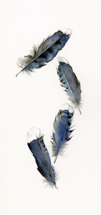 feathers: Feathers Art, Paintings Feathers, Jay Feathers, Watercolor Paintings, Blue Feathers, Blue Jay, Bluejay, Watercolor Feathers, Feathers Paintings
