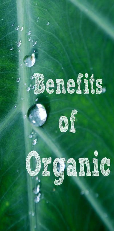 Benefits of Growing Organic Vegetables