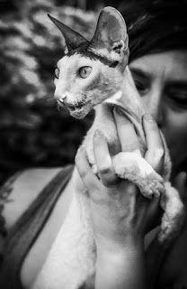 Fotografia - zamrożony ułamek sekundy: Urok kocich oczu.