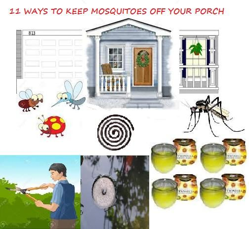 How to get rid of Mosquitoes: 11 WAYS TO KEEP MOSQUITOES OFF YOUR PORCH