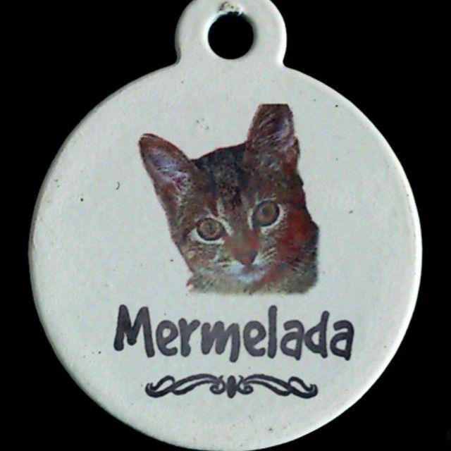 Placas Para Gatos en forma circular con foto.  #PlacasParaMascotas #Foto #Mascotas #Bogota #Gatos #Identificacion